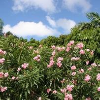 An Island of Flowers