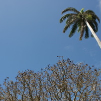 Tree and Palm