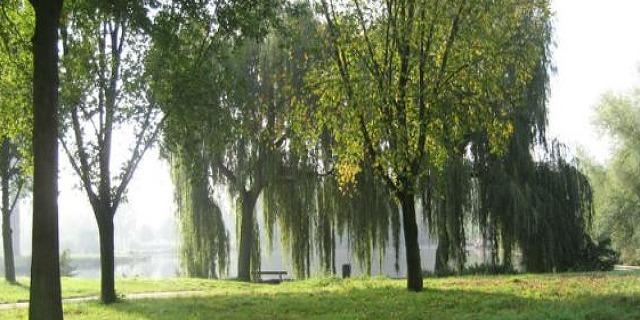 Green Eindhoven