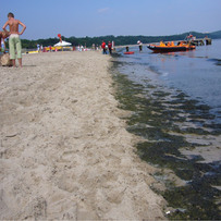That's Why No One Swims, Sopot
