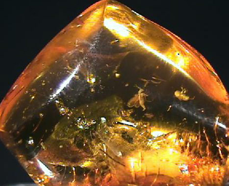 Amber, The Gold of the Baltic