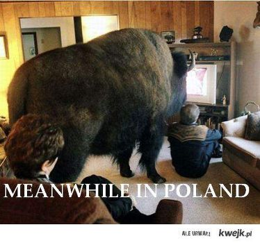 The 50 Funniest 'Meanwhile in Poland...' Memes