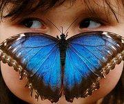 Museum of Living Butterflies