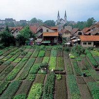 Gardens in the Krakovo district