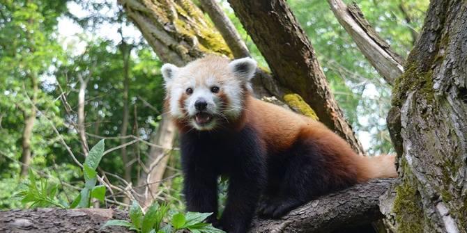 Photo 1 of Zoo Zoo