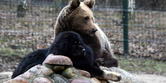 Photo 4 of Zoo Zoo