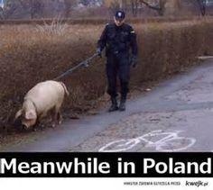2657379342852c0fe28ad3714cd80688--police-humor-police-wife