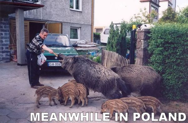 meanwhile-in-poland (1)