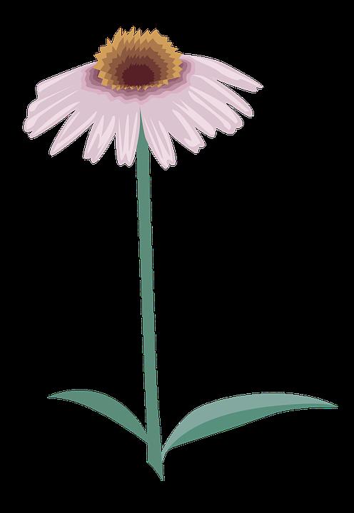 flower-3199959_960_720