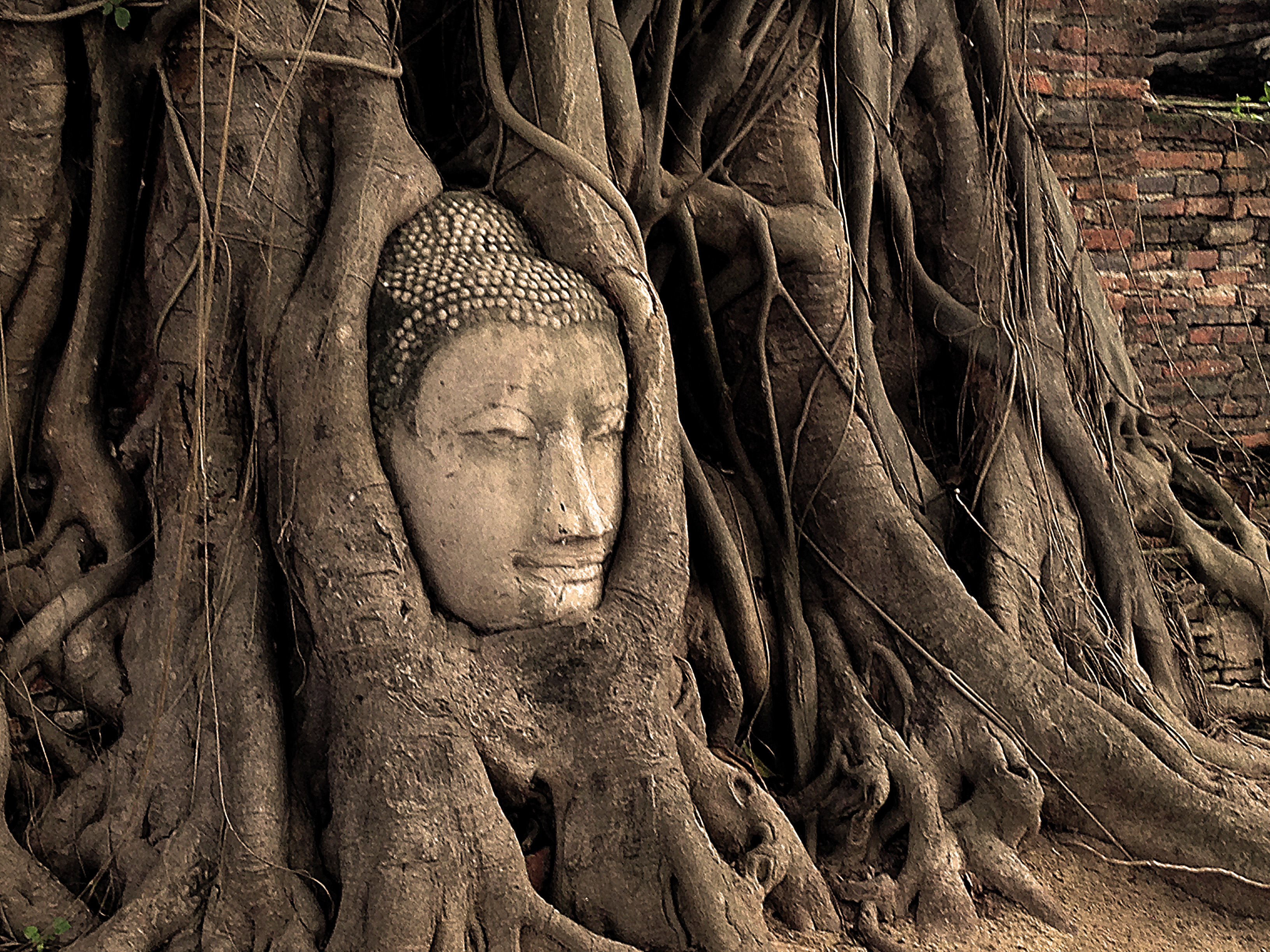 Buddha_Head_in_Tree