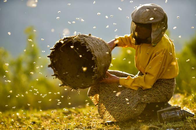 Honeyland_filmstill01_mainmotive